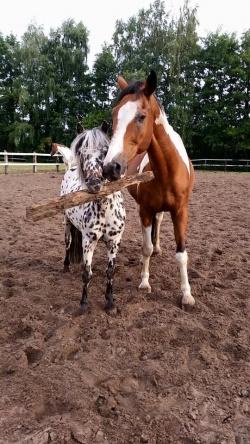 Ponys_2_Luebbenhof