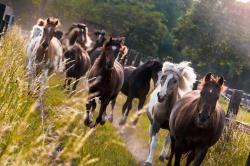 Ponys_luebbenhof